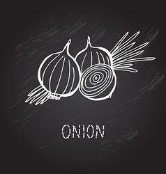 hand drawn onion vector image vector image