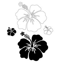 Hibiscus silhouettes vector image vector image