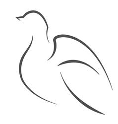 Dove outline vector