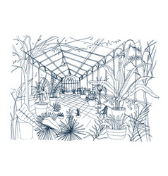freehand sketch of interior of tropical botanical vector image