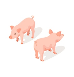 Isometric 3d of small pink cute pig vector