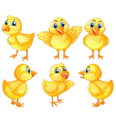 Six cute chicks on white background vector
