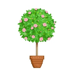 Flowering tree in a pot vector
