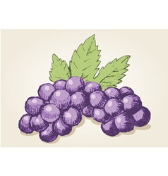 Sketch drawing of grapes vector