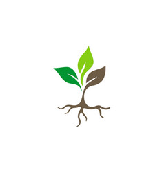 Seed plant root logo vector