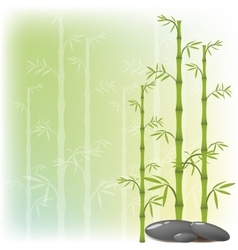 A bamboo and stone vector image vector image