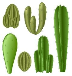 Cactus set vector image vector image