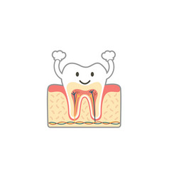 healthy tooth anatomy is fun isolated on white vector image vector image