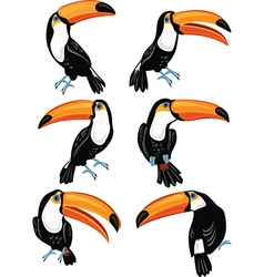 Set of toucans vector image vector image