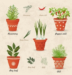 Vintage collection of different herbs planted in vector
