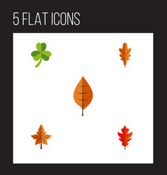 Flat icon foliage set of frond foliage linden vector