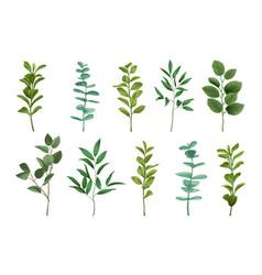 Bouquet greenery set vector