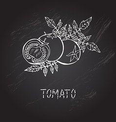 Hand drawn tomatoes vector