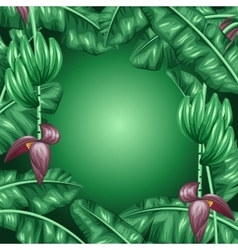 Background with banana leaves decorative image of vector