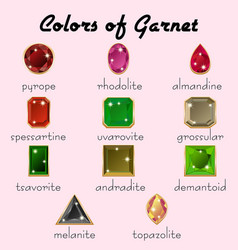 colors of garnet in different cuts vector image vector image