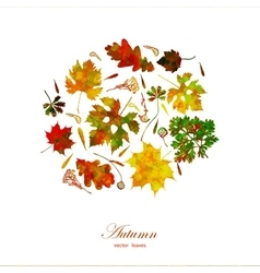 Leaf colorful autumn background EPS10 vector image