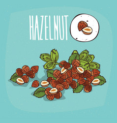 set of isolated plant hazelnut nuts herb vector image