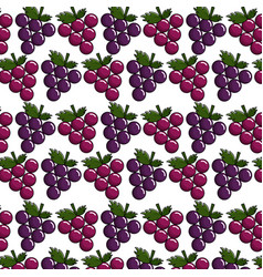 Grapes background icon stock vector