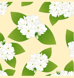 Arabian jasmine on yellow ivory background vector