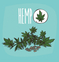 Set of isolated plant hemp leaves herb vector
