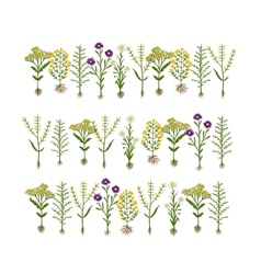 Herbarium flowers with roots sketch for your vector