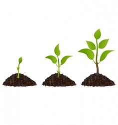 Plant life process vector