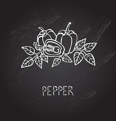 Hand drawn peppers vector
