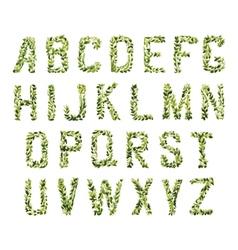 Foliage Decorative Green Font vector image