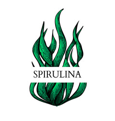Spirulina algae hand drawn isolated label vector