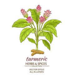Turmeric plant vector
