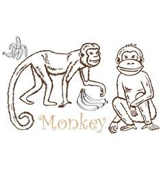 Monkey and Bananas drawing vector image