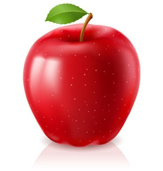 ripe red apple vector image