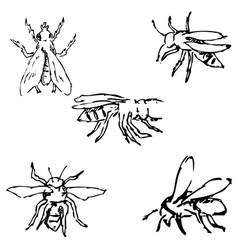 flies sketch by hand pencil drawing vector image vector image