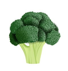 Realistic broccoli vector