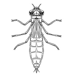 Dragonfly nymph vector