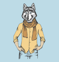 Husky in human shirt vector