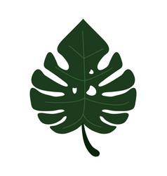 Monstera tropicalplant icon vector