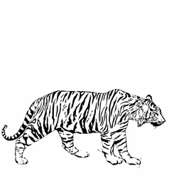 Sketch of tyger vector image
