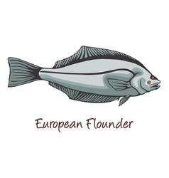 European flounder color vector