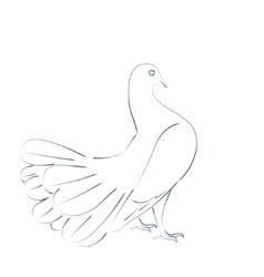 Sketched dove vector image