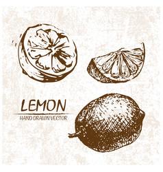 Digital detailed lemon hand drawn vector