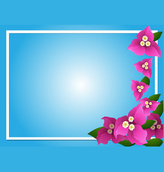 Border template with pink bougainvillea vector
