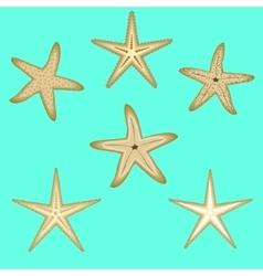 Starfish a set of six options vector image vector image
