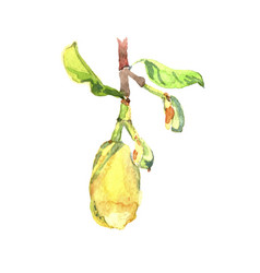 Fetus jackfruit watercolor tropical leaves vector