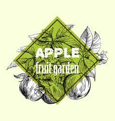 Sketch of apple vector