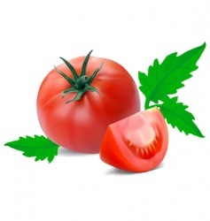tomato with segment vector image