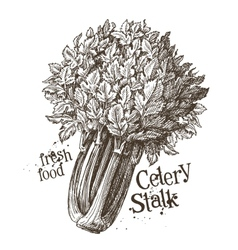 Celery stalk logo design template fresh vector