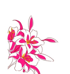 Beautiful bouquet of pink lilies vector image