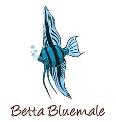 Betta color vector