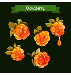 Colorful branch of cloudberry vector
